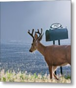 Special Delivery Metal Print