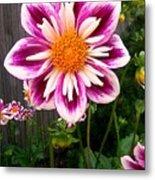 Special Flower Metal Print