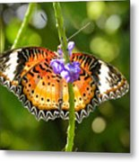 Speckled Butterfly Metal Print