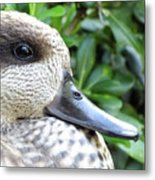 Speckled Duck Metal Print