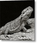 Speckled Iguana Lizard Metal Print