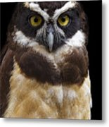 Spectacled Owl Metal Print