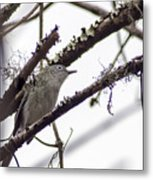Spectacled Visitor Metal Print