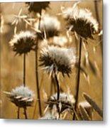 Spent Flowers In The Field Metal Print