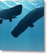 Sperm Whale Encounter Metal Print