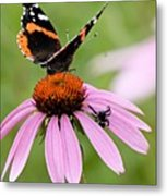 Spider And Butterfly On Cone Flower Metal Print
