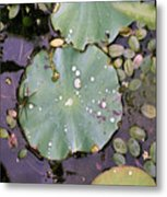 Spider And Lillypad Metal Print