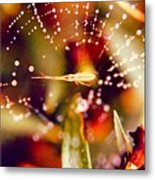 Spider And Spider Web Metal Print