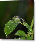 Spider And The Shower Metal Print