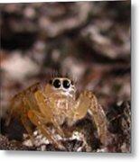 Spider Eyes Metal Print