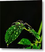 Spider In The Shower Metal Print
