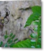 Spider In Thin Air Metal Print