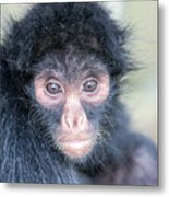Spider Monkey Face Metal Print