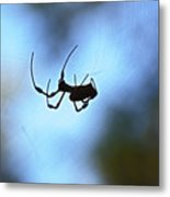 Spider Silhouette Metal Print