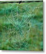 Spider Web In The Springtime Metal Print
