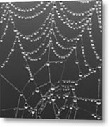 Spider Web Patterns Metal Print