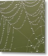 Spider Web With Water Droplets  Metal Print