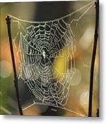 Spider's Creation Metal Print