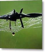 Spiderweb On Fencing Metal Print