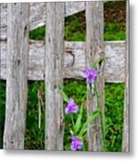 Spiderworts By The Gate Metal Print