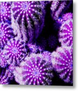 Spiky Bunch 1.1 Metal Print