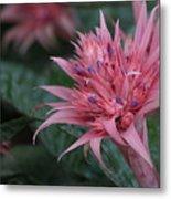 Spiky Pink Metal Print