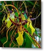 Spindly Orchid Metal Print