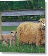 Sping Lambs Metal Print