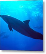 Spinner Dolphin Metal Print