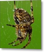 Spinning A Web Metal Print