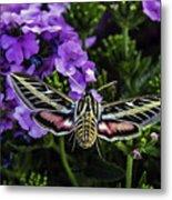 Spinx Moth Metal Print