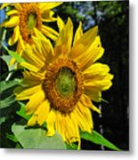 Spirals Of Sun Metal Print