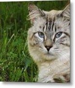 Spirit Cat Metal Print