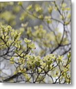Spirit Of The Dogwood Metal Print