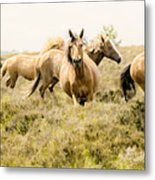 Spirit Of The Horse Metal Print