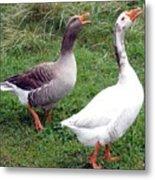 Spirited Geese Metal Print