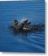 Splashing Cormorant Metal Print