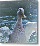 Splashing Duck Metal Print