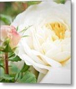 Splended Roses Metal Print