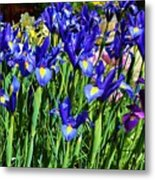 Vivid Blue Iris Flowers Metal Print