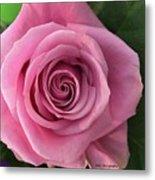 Splendid Rose Metal Print