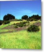 Splendor In The Grass Metal Print by Kathy Yates