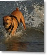Splish Splash I Was Taking A Bath Metal Print