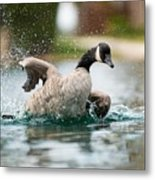 Splish Splash Metal Print