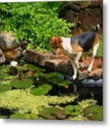 Sporty At The Lily Pond Metal Print