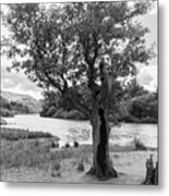 Spot The Woman And Her Dog- Behind The Tree Metal Print