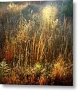 Spotlight On The Marsh Metal Print