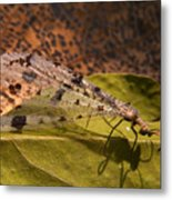 Spotted Mayfly Metal Print