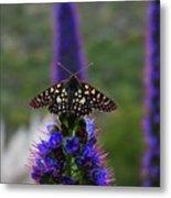 Spotted Moth On Purple Flowers Metal Print