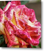 Spotted Rose Metal Print